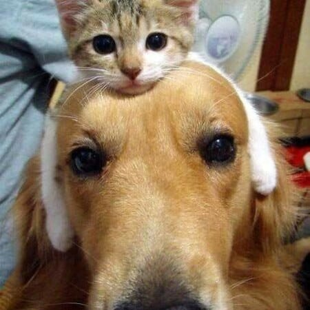 Cats are friendly with other animals.