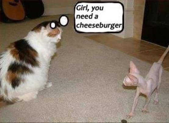 Funny Animal Pictures - these are HILARIOUS!