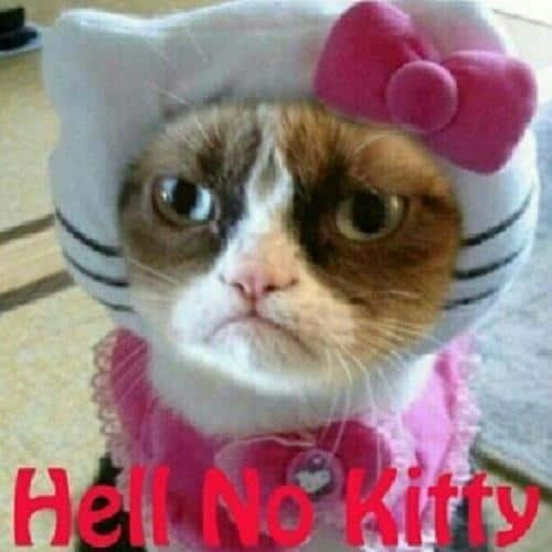 grumpy cat on Pinterest | Grumpy Cat, Grumpy Cat Meme and ...