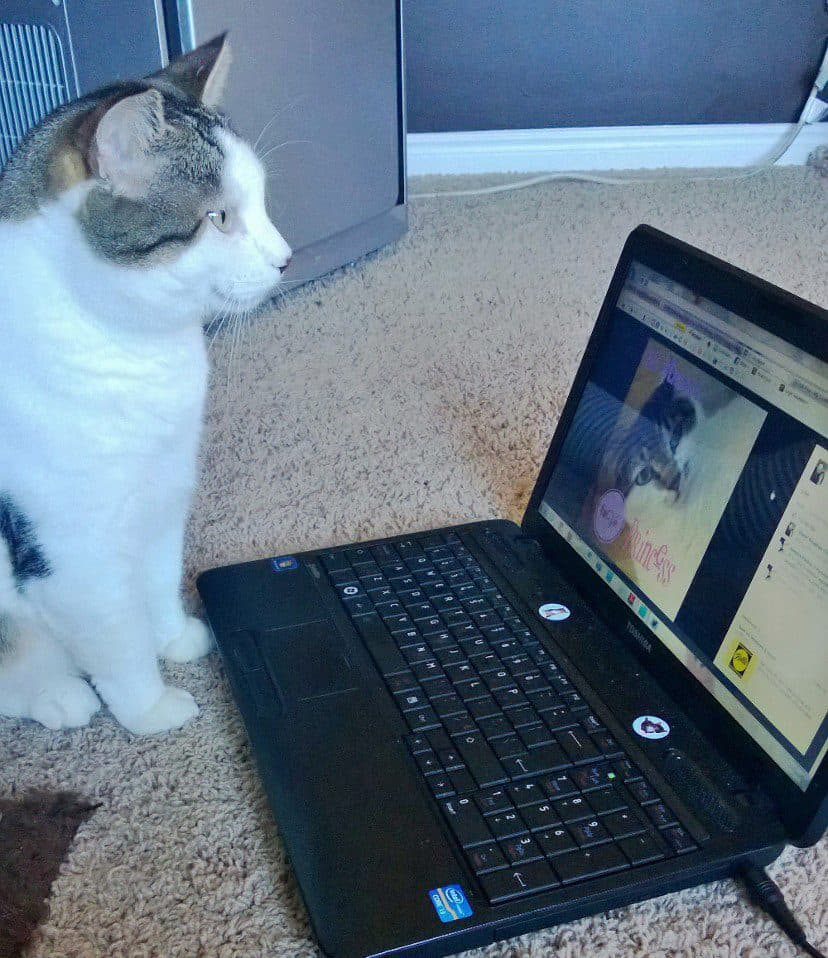 Popular Cats Online - you need to follow these cats!