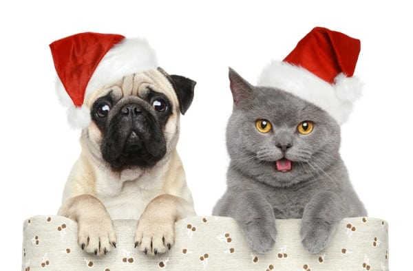Petcurean Holiday Giveaway