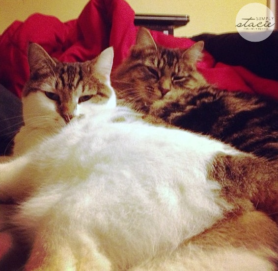 I Want To Cuddle With You Quotes: 4 Easy Ways To Show Your Cat Love