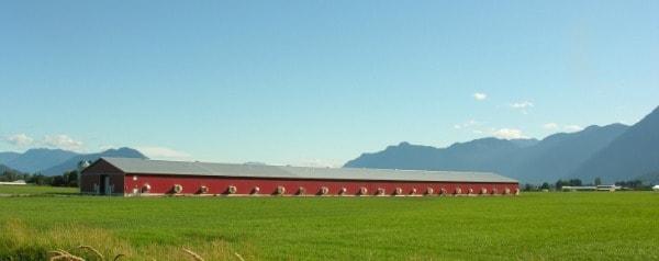 Meet the Chicken Farmers of Canada #ChickenDotCA