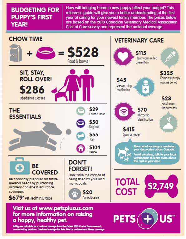 Budgeting for Puppy's First Year