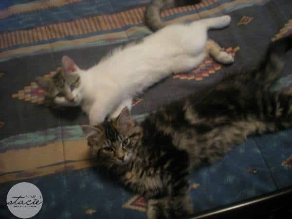 princess & misty kitty