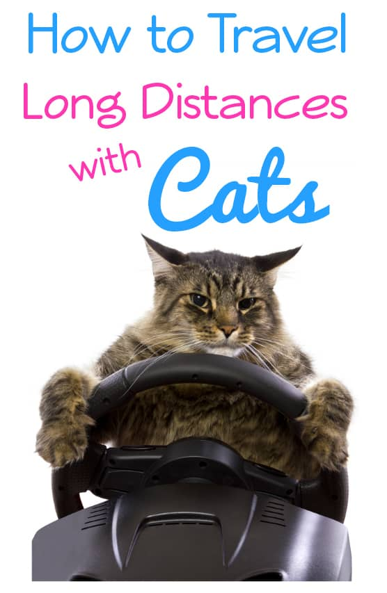 How to Travel Long Distances with Cats - Heading on a road trip with your cats? Check out these seven tips for traveling with your cat.