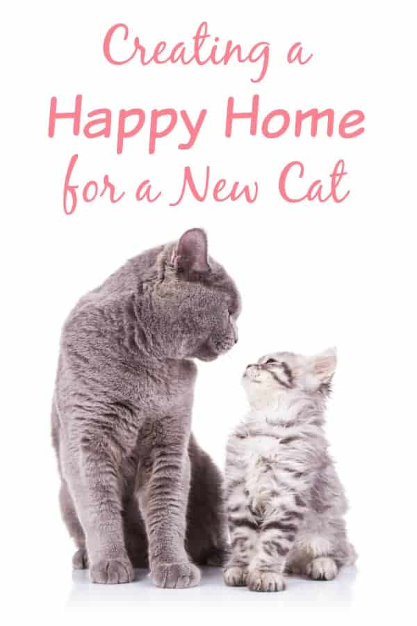 Creating a Happy Home for a New Cat