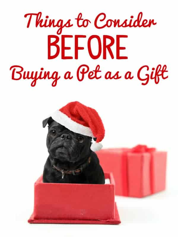 Things to Consider Before Buying a Pet as a Gift