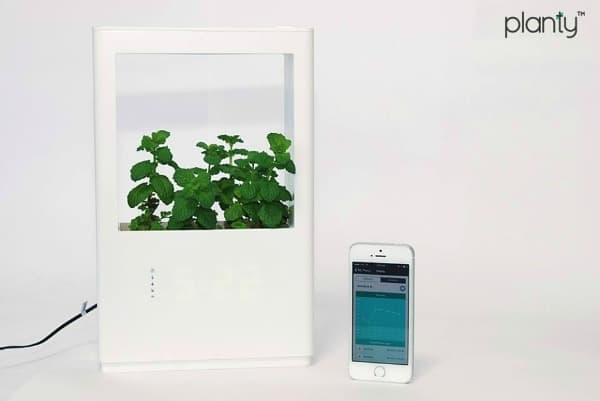 planty-6