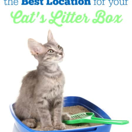 How to Pick the Best Location for Your Cat's Litter Box