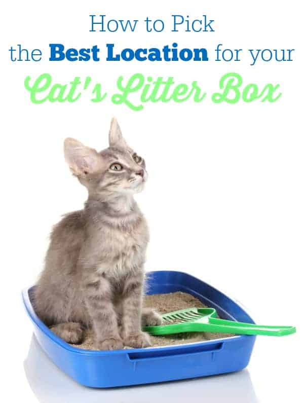 How to Pick the Best Location for Your Cat's Litter Box - Yes, there is a right and wrong location!