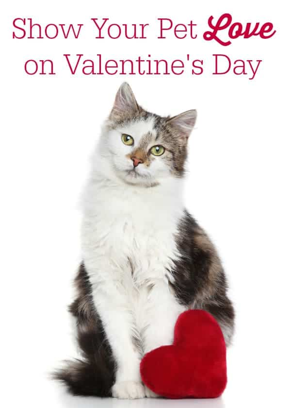Show Your Pet Love on Valentine's Day
