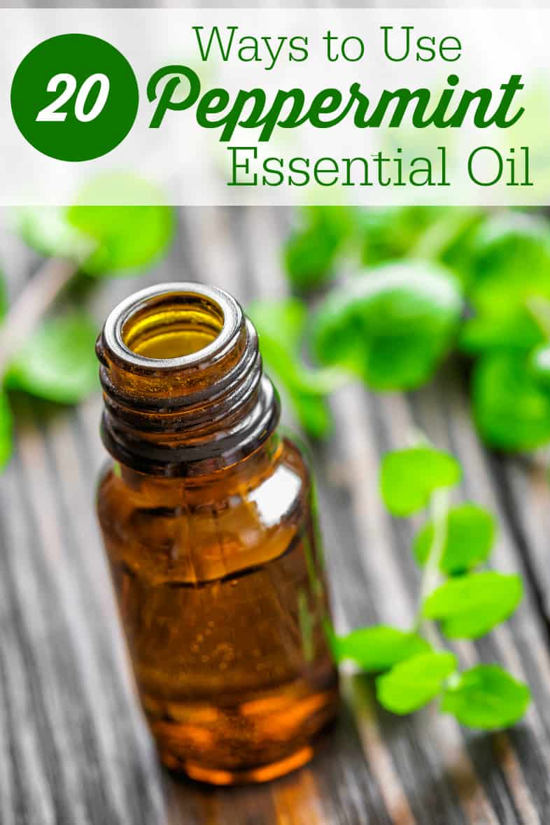 20 Ways to Use Peppermint Essential Oil - So many ways to use this versatile oil like health, cleaning, cooking and more!