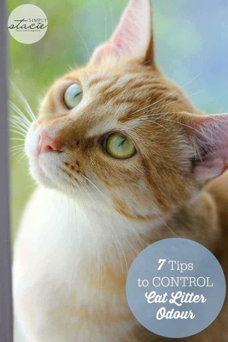 7 Tips to Control Cat Litter Odour
