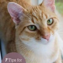 7 Tips For Choosing A Pet Sitter