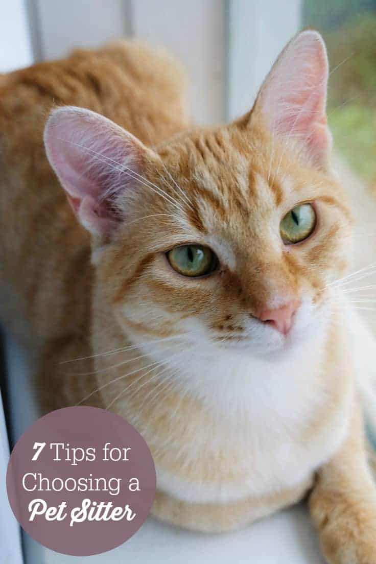 7 Tips For Choosing A Pet Sitter