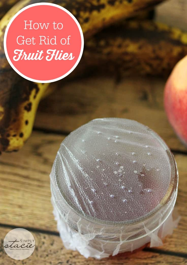 How To Get Rid Of Sewer Smell In Your House: How To Get Rid Of Fruit Flies