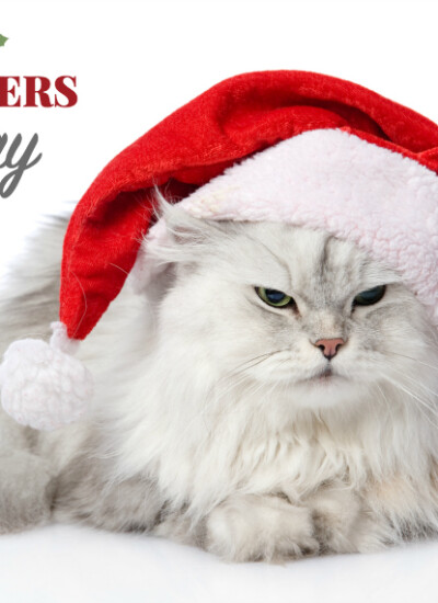 Cool Holiday Gifts for Cats