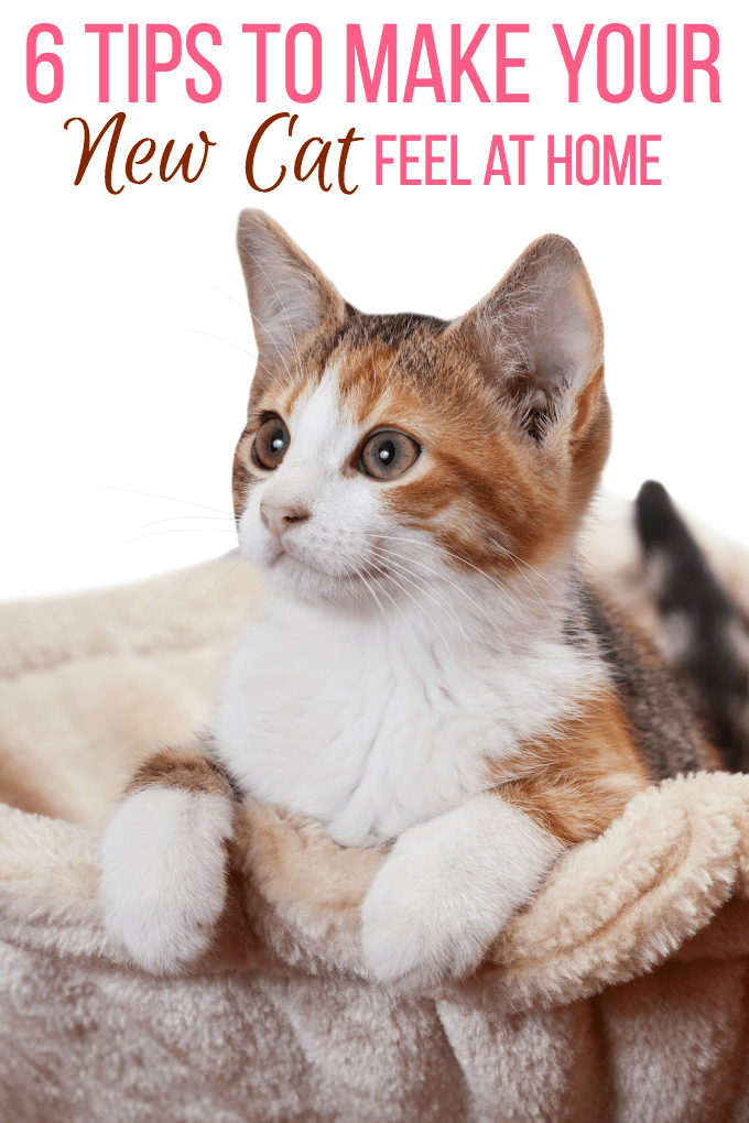 6 Tips To Make Your New Cat Feel At Home