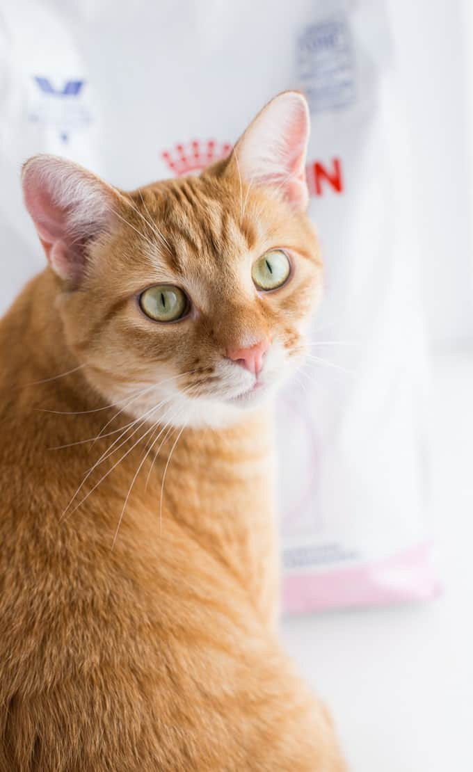My Cat's Journey to Oral Health #DentalPetFacts