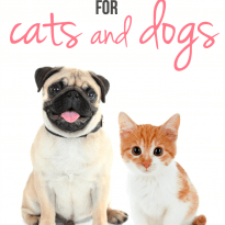subscription boxes cats dogs