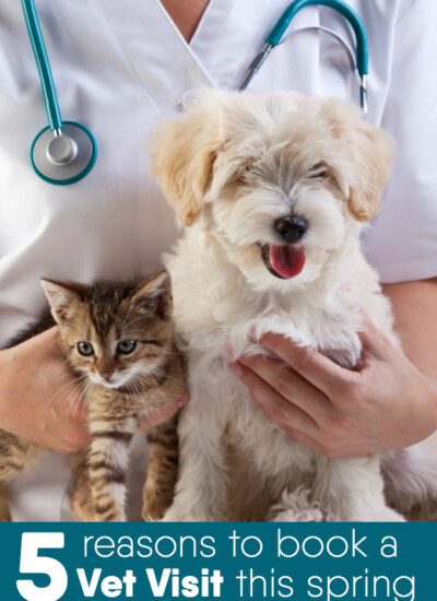 5 Reasons to Book a Vet Visit This Spring