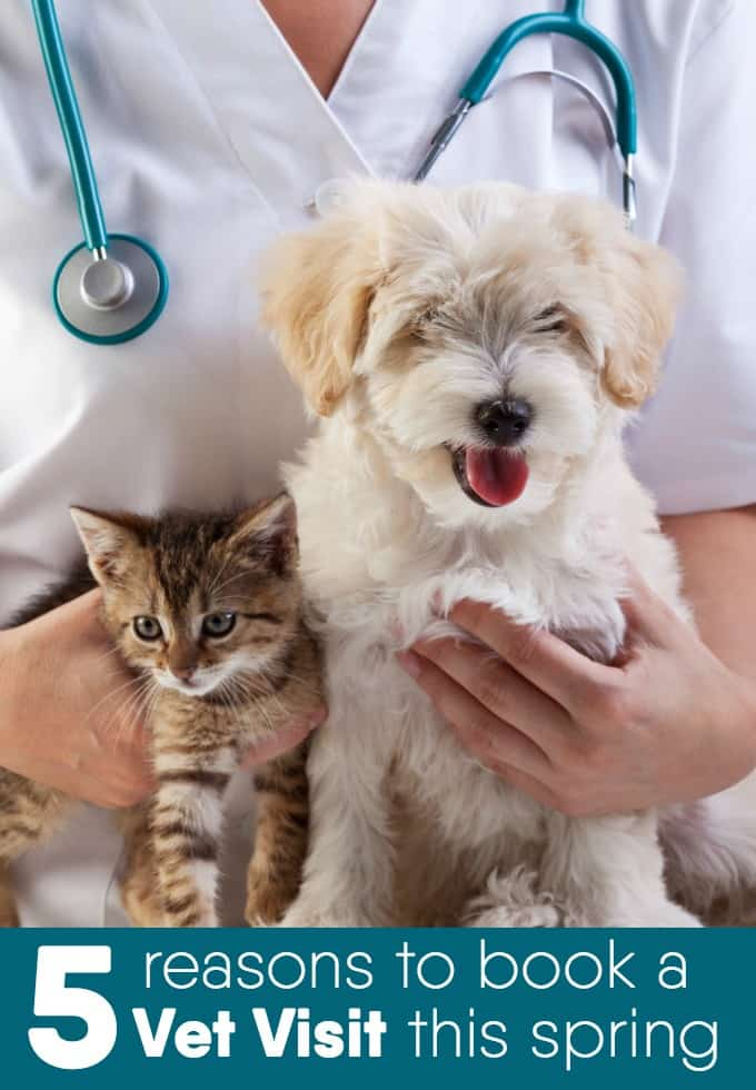 5 Reasons to Book a Vet Visit This Spring - A list of some common concerns pet owners may be facing this time of year and why you should book an appointment with your local vet!