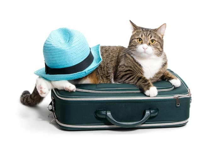 15 Tips for Travelling with Pets - Simply Stacie