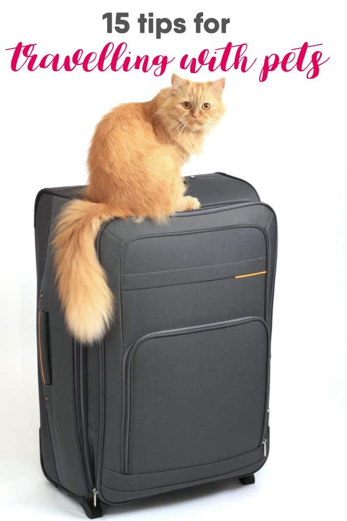 15 Tips for Travelling with Pets - Make the trip easy for everyone with these handy tips and free printable checklist.