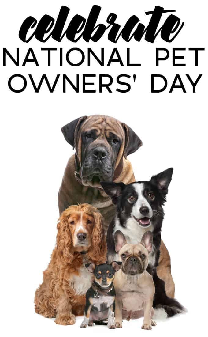 Celebrate National Pet Owners Day - Simple tips to show your pets some appreciation!
