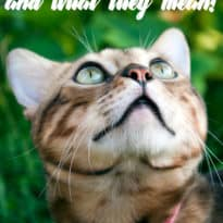 Cat Behaviours and What They Mean