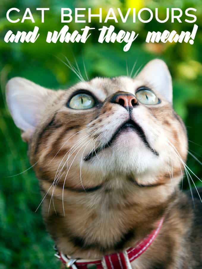 Cat Behaviours and What They Mean - Decoding them can go a long way to helping you understand, and appreciate, your feline friends.