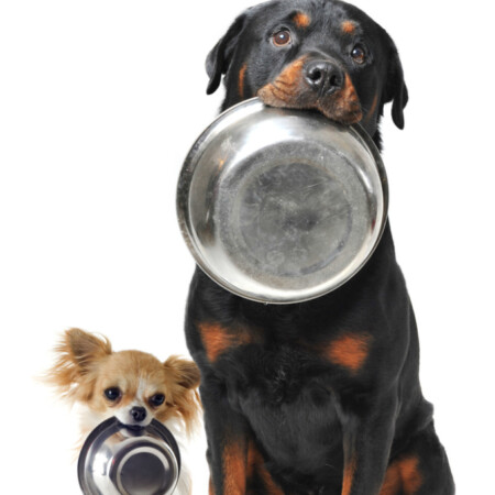 5 Foods You Should Never Feed Your Dog