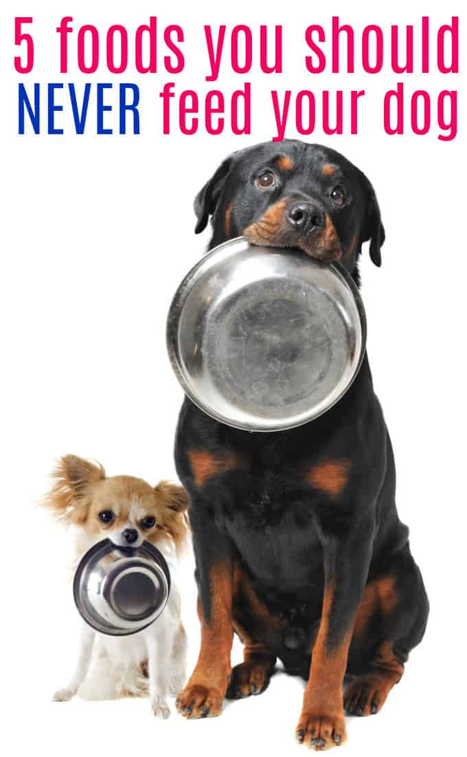 5 Foods You Should Never Feed Your Dog - Some human food can be toxic to dogs. Keep your furry friend safe!