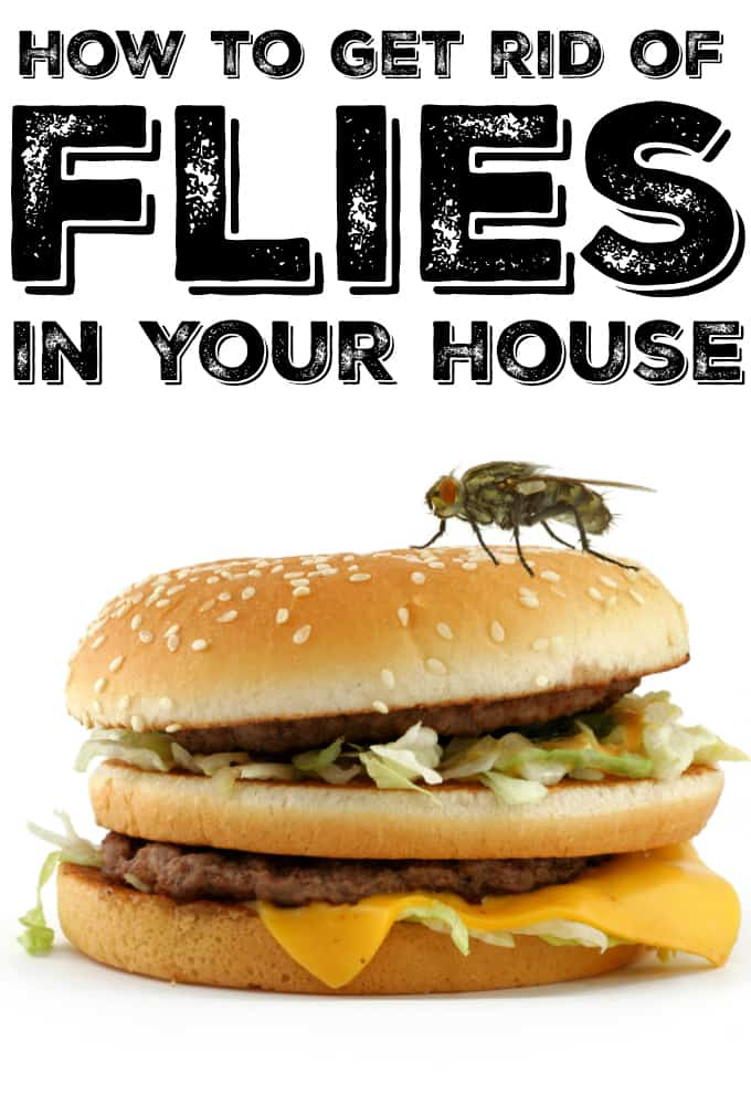How to Get Rid of Flies in Your House - Simple tips to get rid of these annoying bugs!