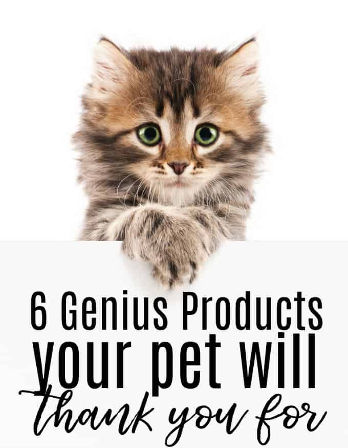 6 Genius Products Your Pet Will Thank You For - Our fur-family deserves to be pampered just as much as much as we do.