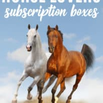 7 Horse Lovers Subscription Boxes