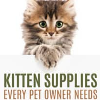 9 Kitten Supplies Every Pet Owner Needs