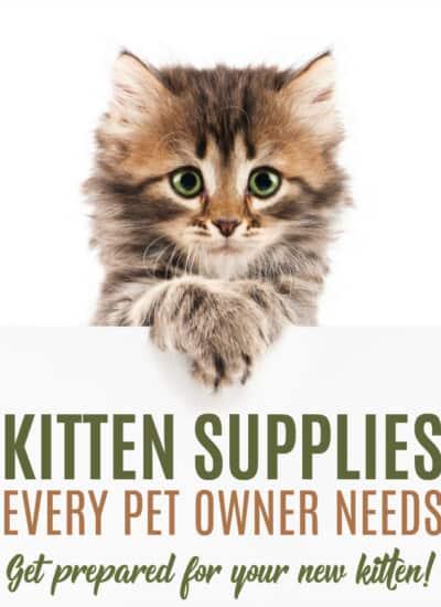 9 Kitten Supplies Every Pet Owner Needs
